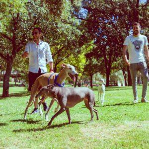 adiestrador-canino-valencia_DSC5906