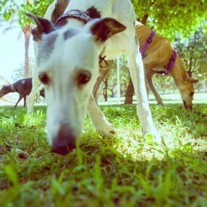 adiestrador-canino-valencia_DSC5943