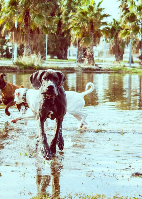 grupos-de-socializacion-walking-dogs-2
