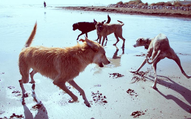 grupos socialización walking dogs
