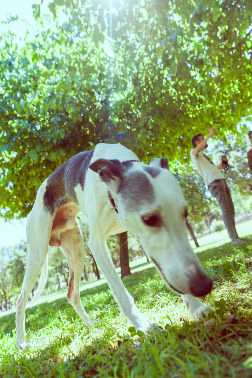 adiestrador-canino-valencia_DSC5936
