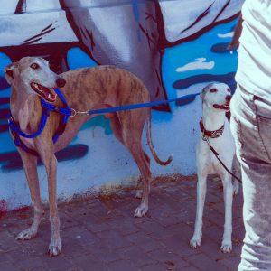 adiestrador-canino-valencia_DSC6268