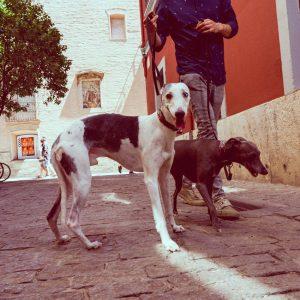adiestrador-canino-valencia_DSC6372
