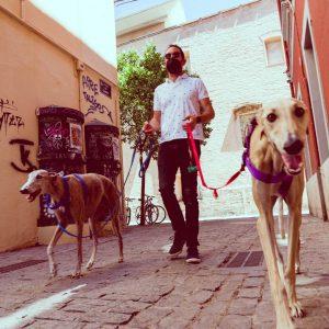 adiestrador-canino-valencia_DSC6392