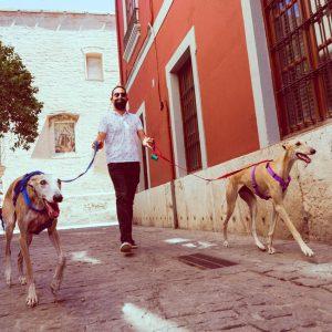 adiestrador-canino-valencia_DSC6403